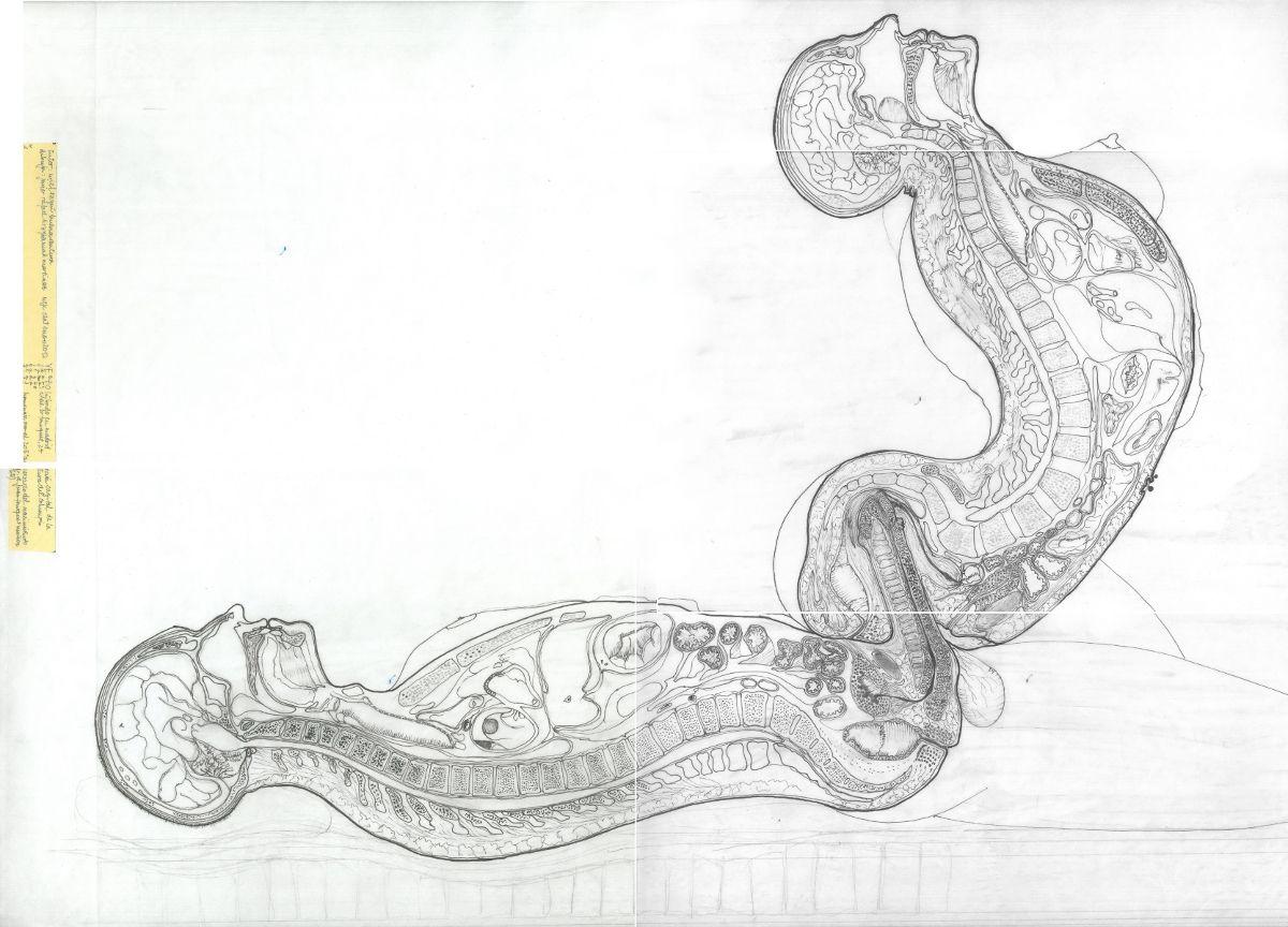pfc lapiz dibujo madrid anatomia drfourquet arquitectura