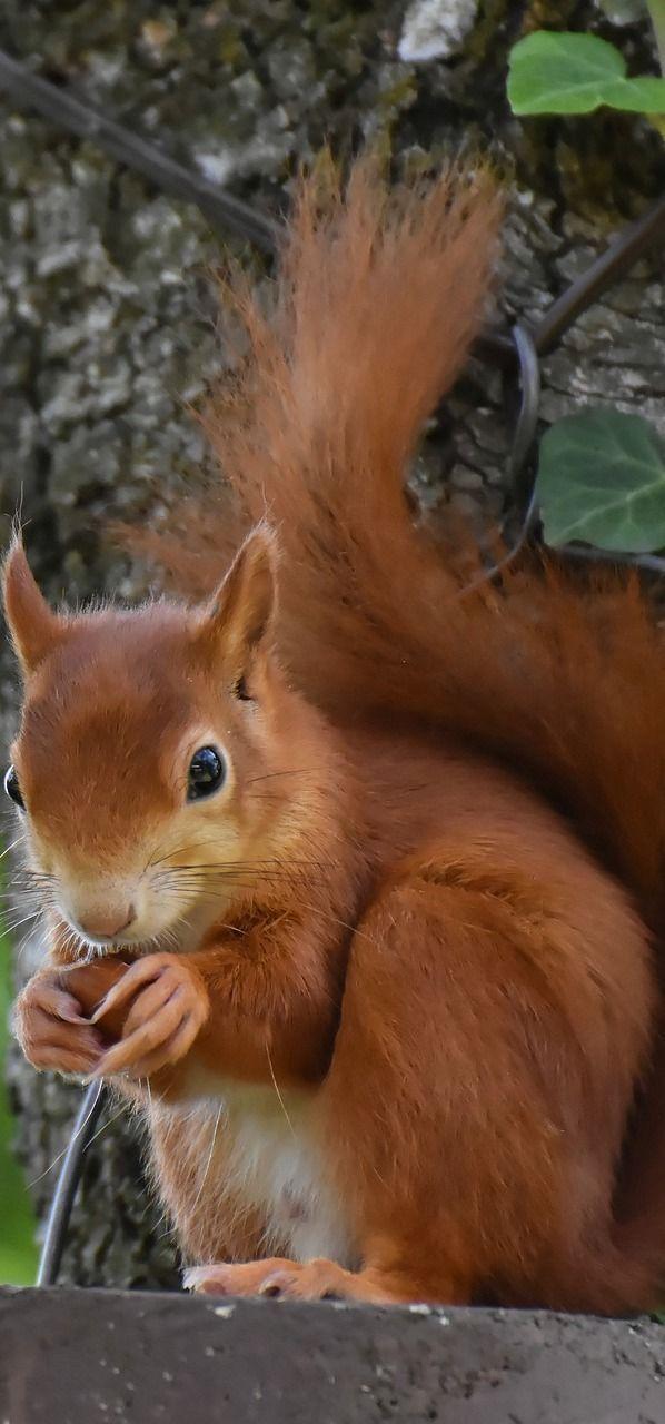 Photo of A cute squirrel. #Animals#CuteAnimals #Squirrel #AnimalsBeautifulA #cute #squirr…