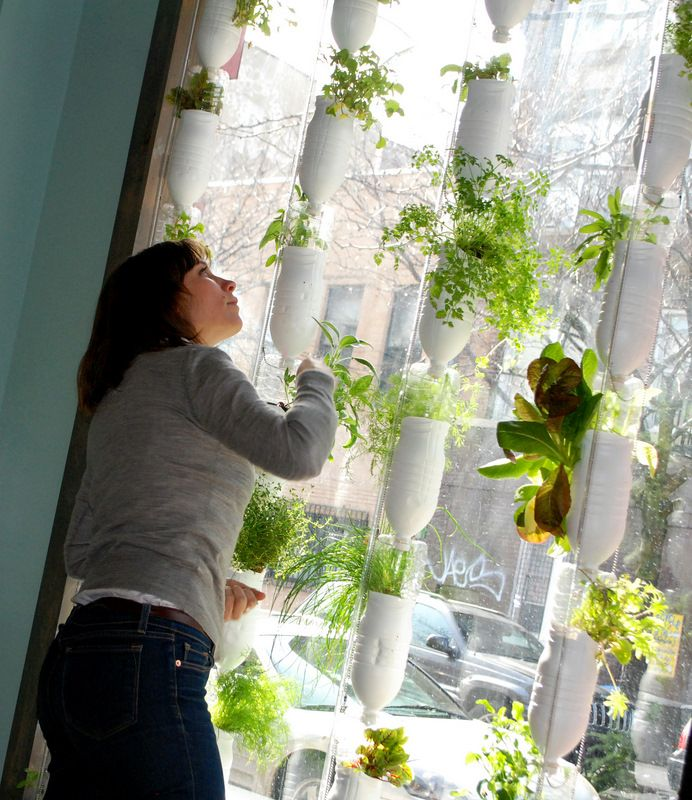 Hydroponic window garden. Made from recycled materials, no