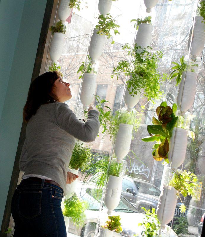 Nice Window Farm Hydroponics.