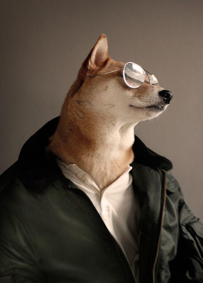 Top Dog   #mensweardog #menswear #dog #shiba #fashion #dapper #military #army
