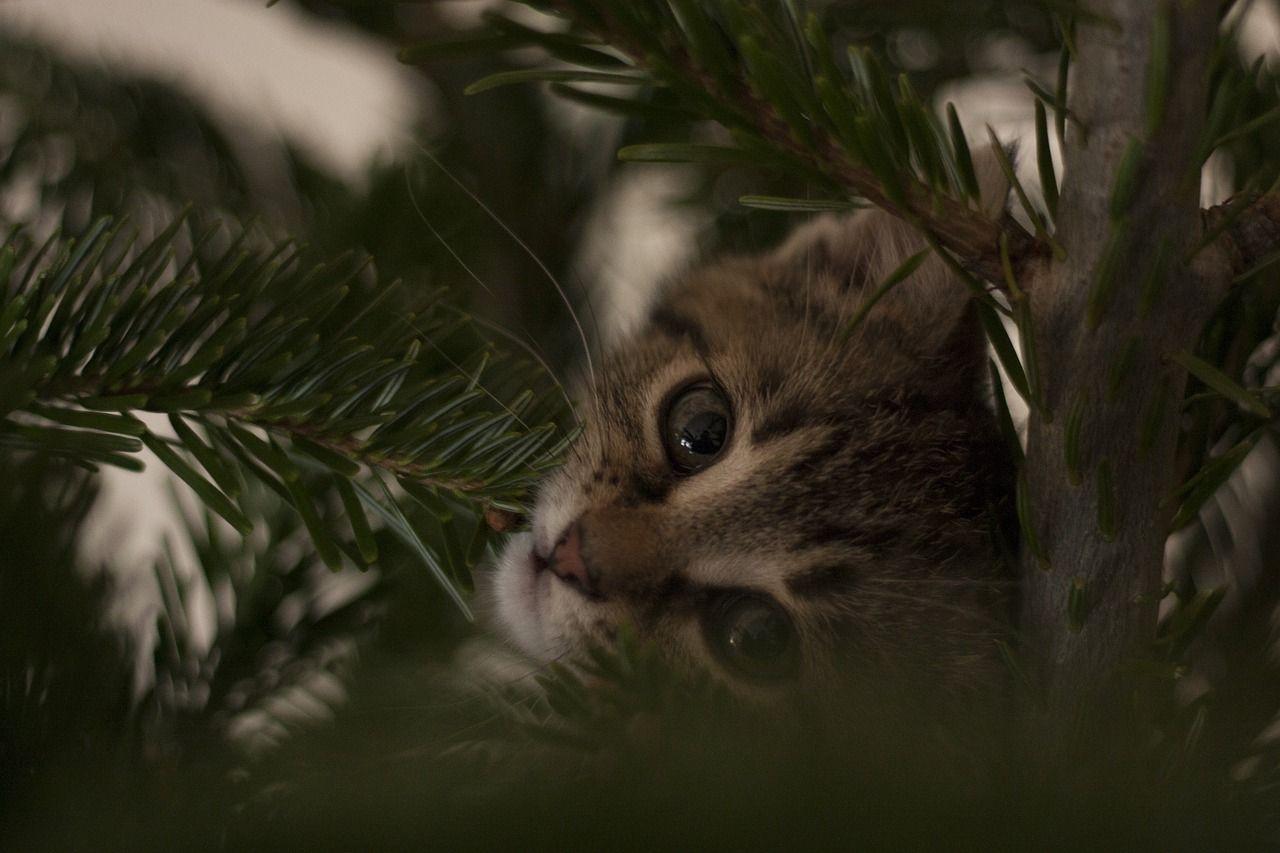 vacation cat xmas christmas tree holiday vacation cat xmas jpg 1280x853 christmas vacation cat