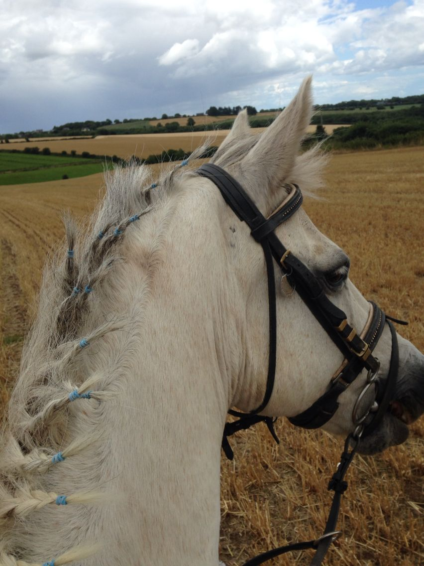 Bright Eyed Rearing To Go For A Gallop Horses Equine Horses Animals Equines