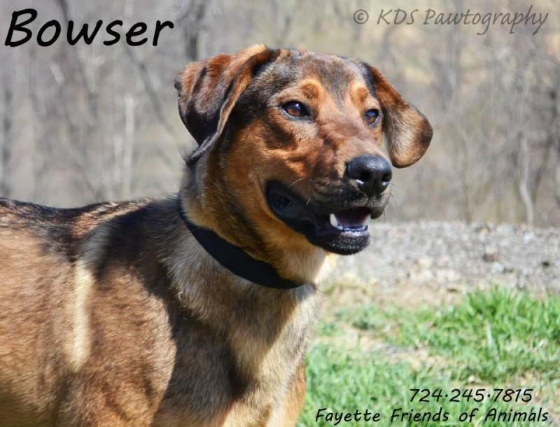 Adopt Bowser On Attitude And Humor Dogs Mountain Cur Dog