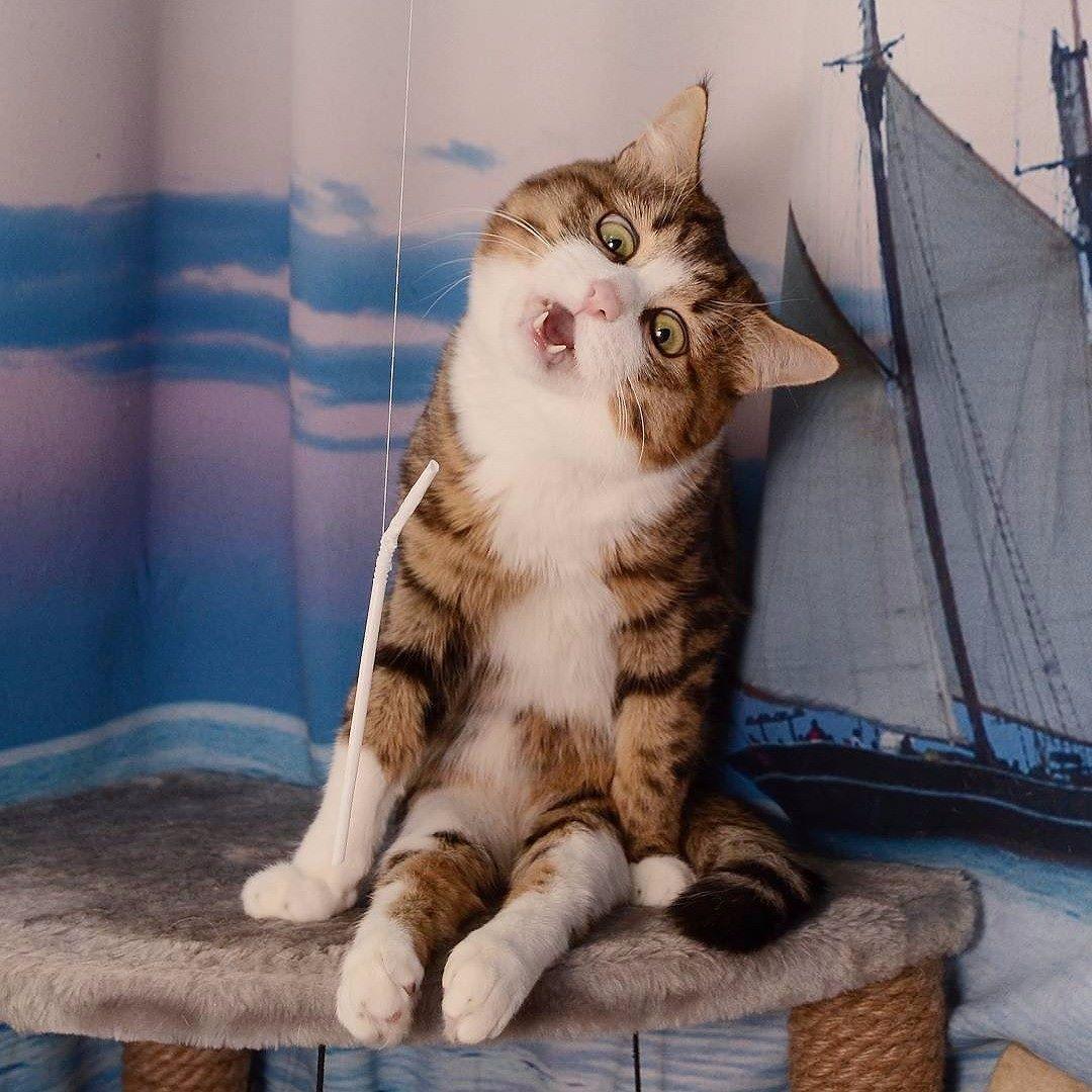 ) cat cats kitten kittens meow bestmeow meowbox