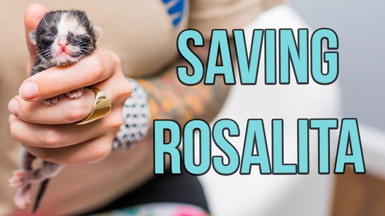 Saving A One Day Old Kitten Rosalita Youtube Rosalita Beautiful Cats Pictures Cute Cat Gif