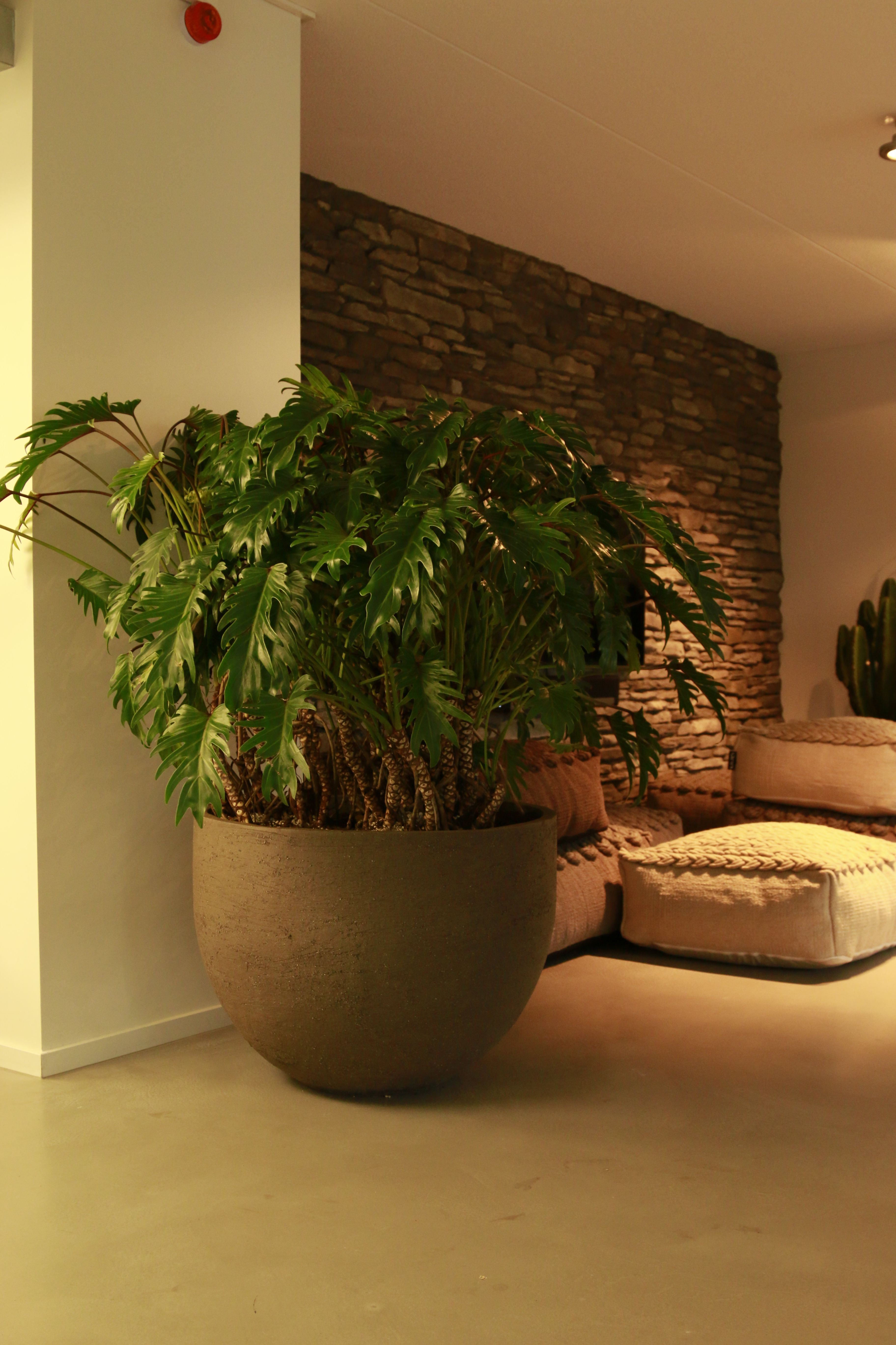 Atelier Vierkant U80G Planter With Philodendron Xanado