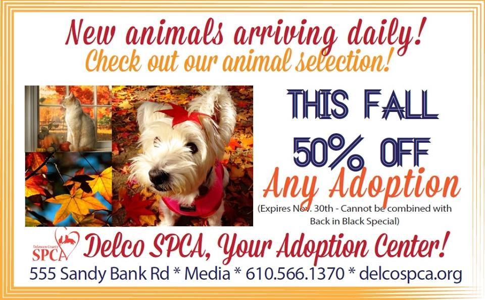 Delaware County Pa Spca Back By Popular Demand 50 Off Any
