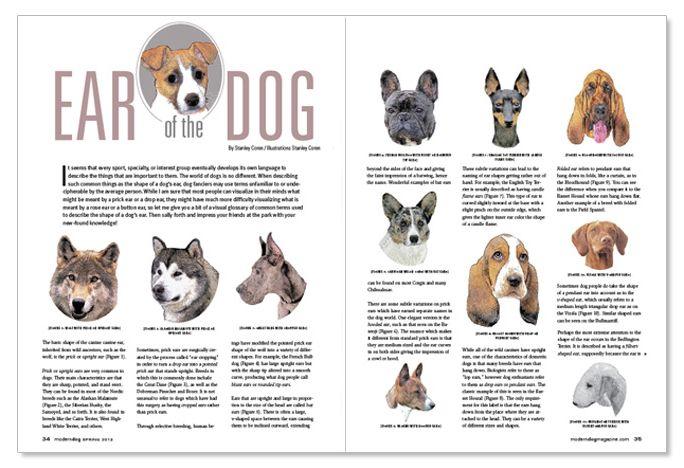Modern Dog Magazine Layout Dog Magazine Modern Dog Magazine Modern Dog