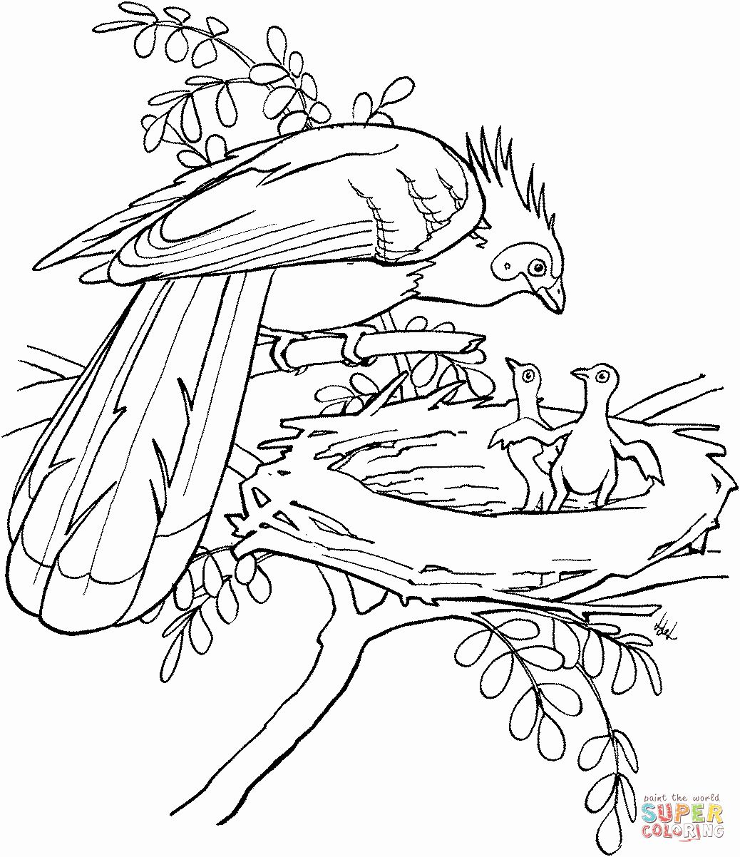 32 Rainforest Animals Coloring Page In With Images