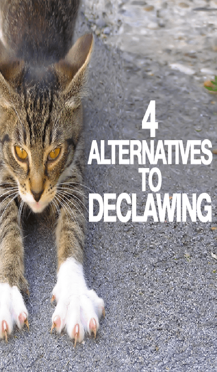 Declawing And Alternatives Cat Guides Cats Declawing Cats Cat Care