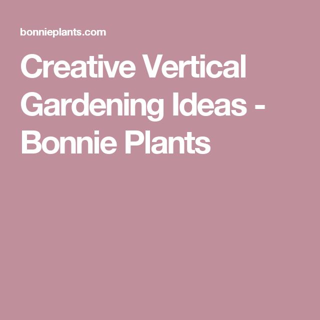 10 Creative Vegetable Garden Ideas: Creative Vertical Gardening Ideas (com Imagens