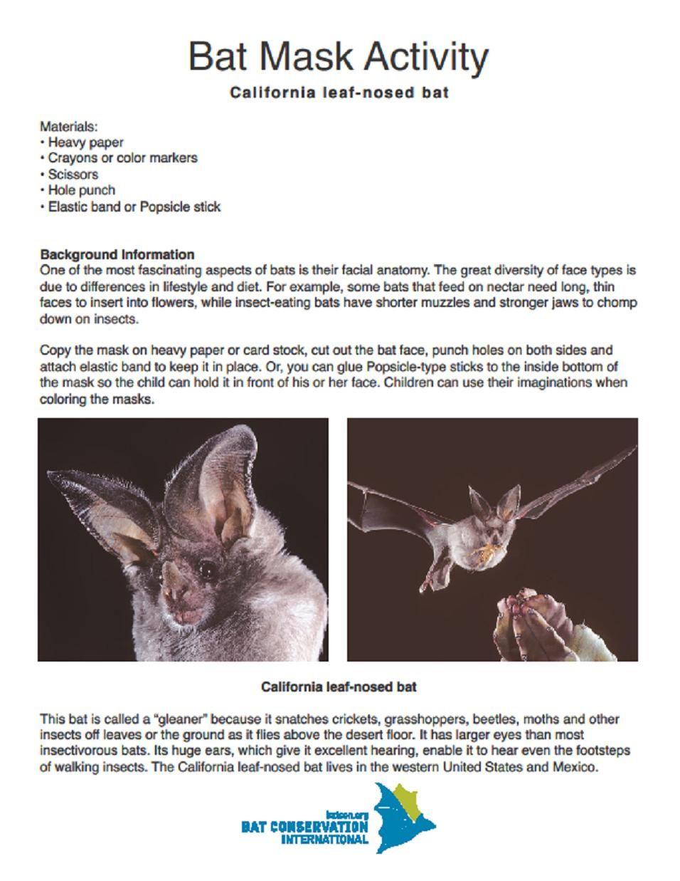 Bat Mask Activity Bat Conservation International