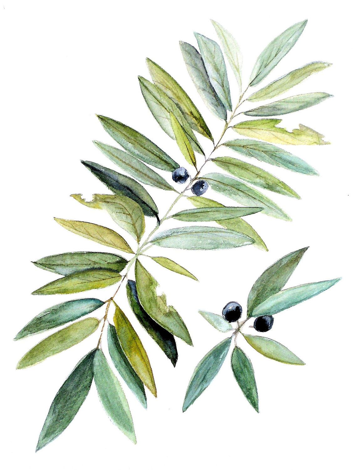 Original watercolor art for sale - Watercolor Painting Botanical Leaves And Berries Natural History Original Art By Laurie Rohner Via Etsy