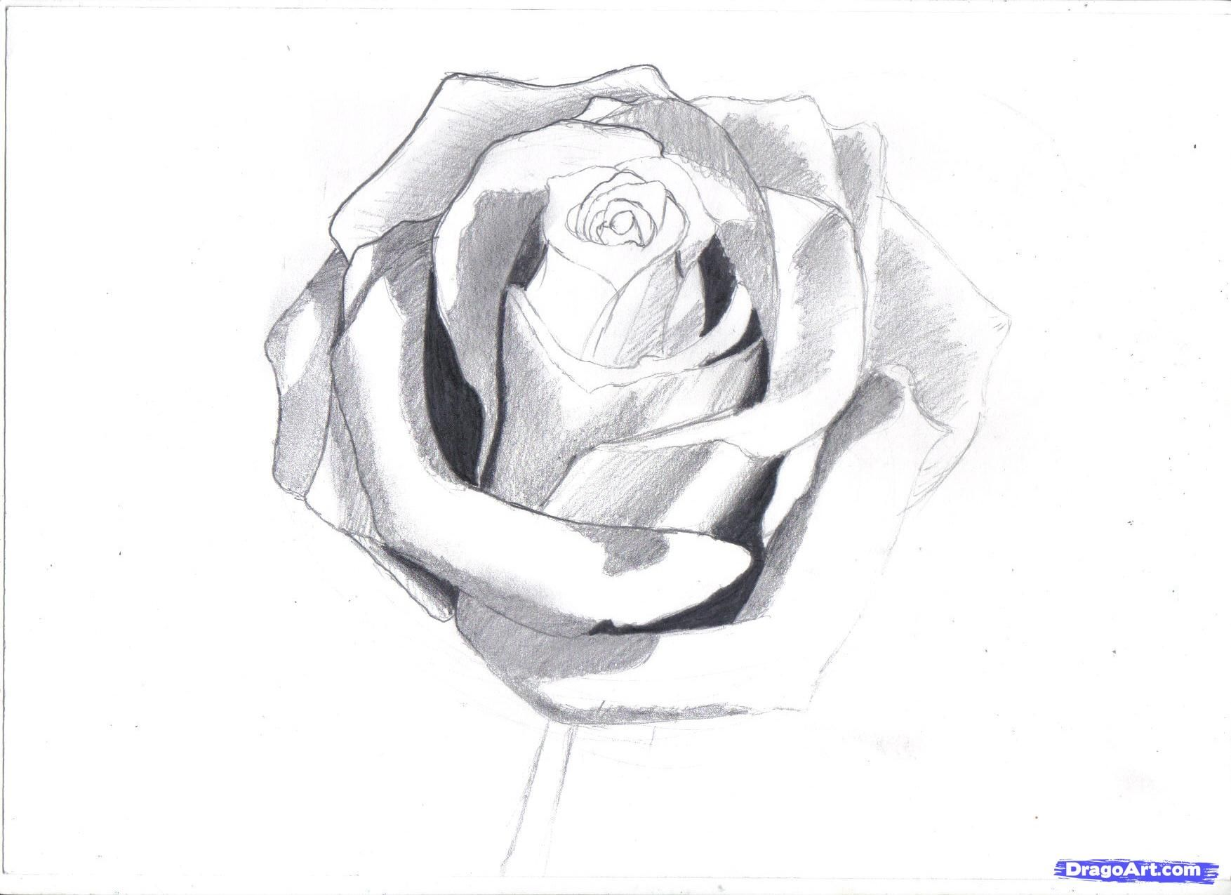 How To Draw A Rose In Pencil, Draw A Realistic Rose Step 6