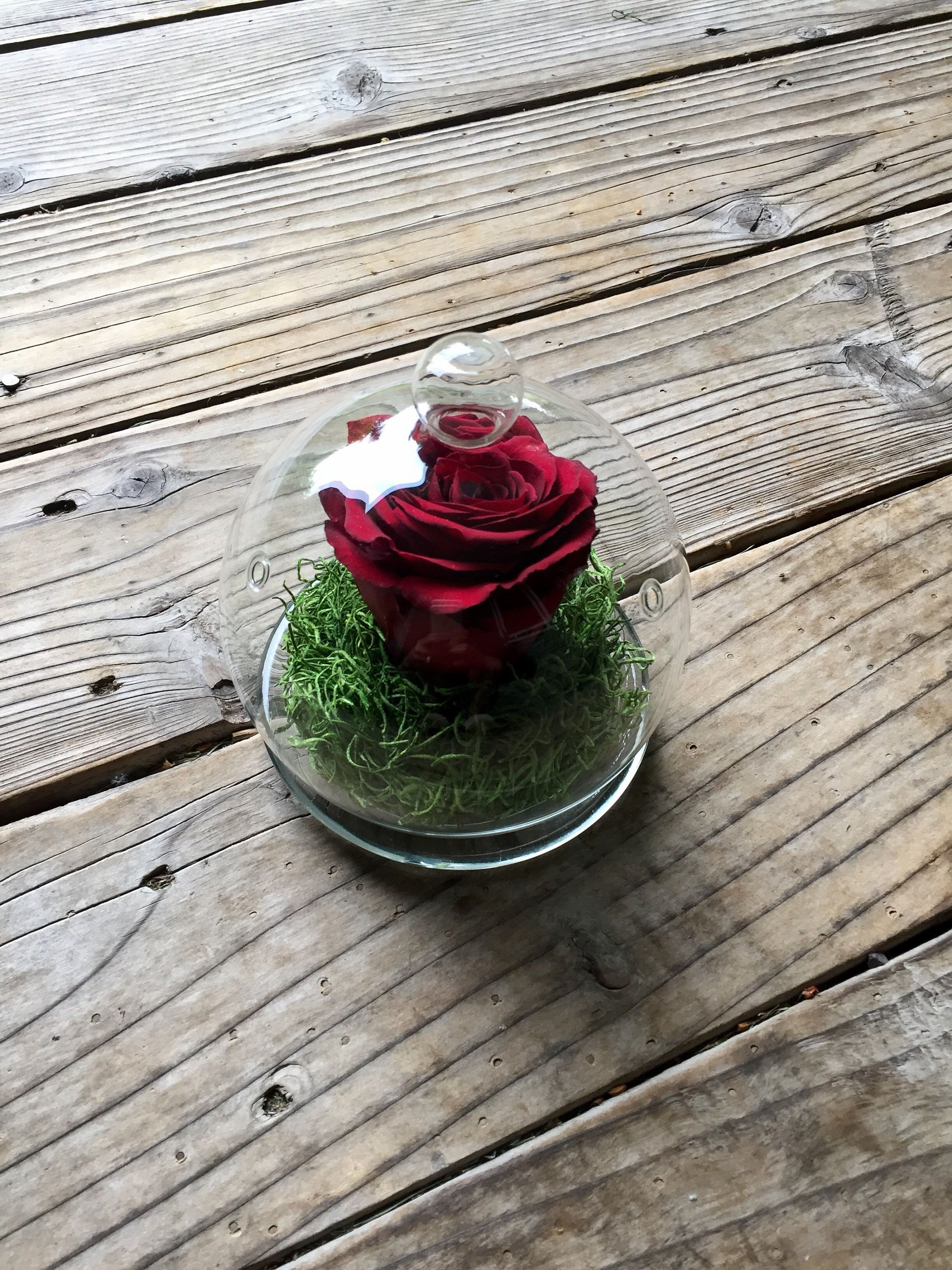 Preserved Rose In A Glass Cloche Preserved Roses Preserved Flowers Forever Roses Red Roses Single How To Preserve Flowers Preserved Roses Rose In A Glass,Joanna Gaines Shiplap Bedroom