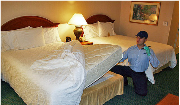 Tips to Get rid of Bed Bugs on your own Bed, Rid of bed