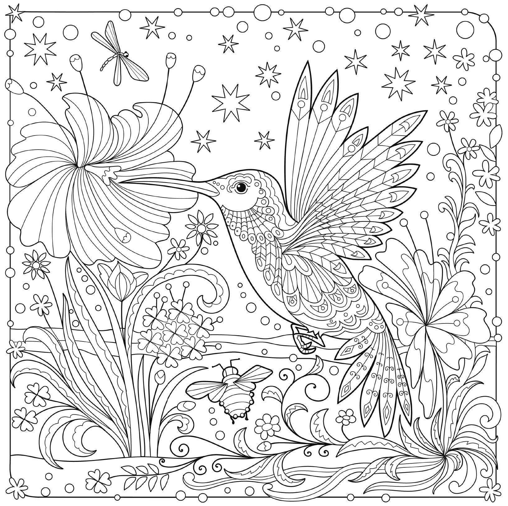 hummingbird colouring page