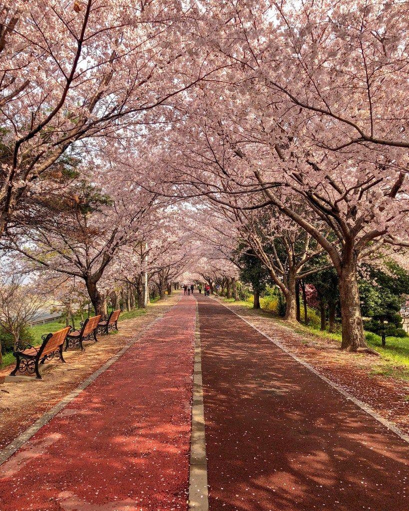 The Ultimate South Korea Bucket List The Wander Files South Korea Travel Korea Travel Scenery
