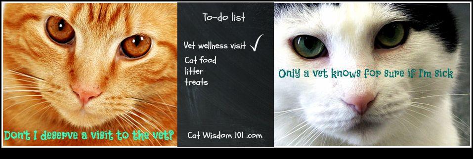 Vet 101Preventive Medicine Keeping Your Cat Healthy