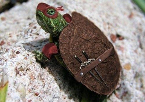 Ninja Turtle Picture On Visualizeus Turtle Ninja Turtles Mutant Ninja Turtles