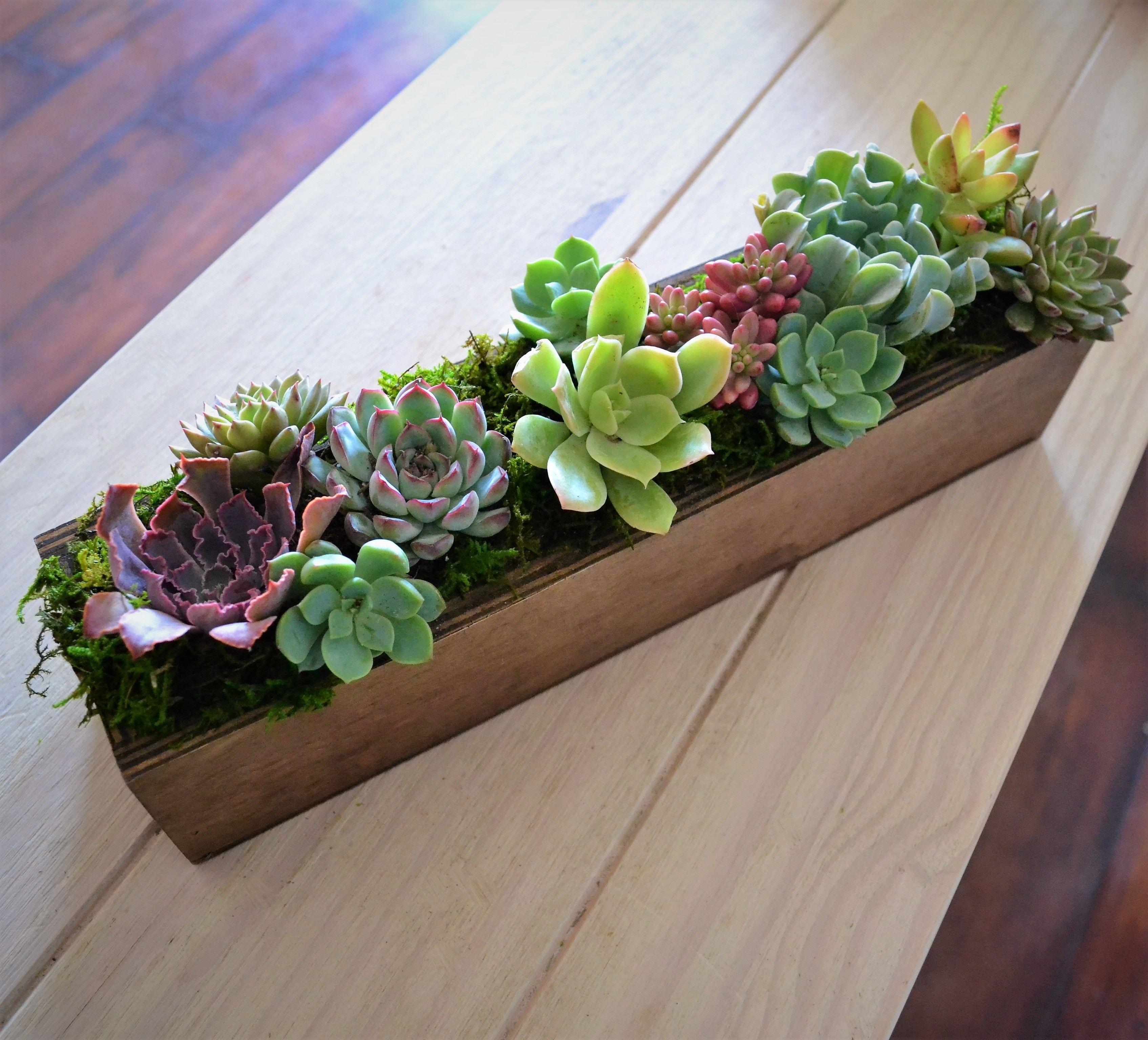 Succulent Planter  Google Search