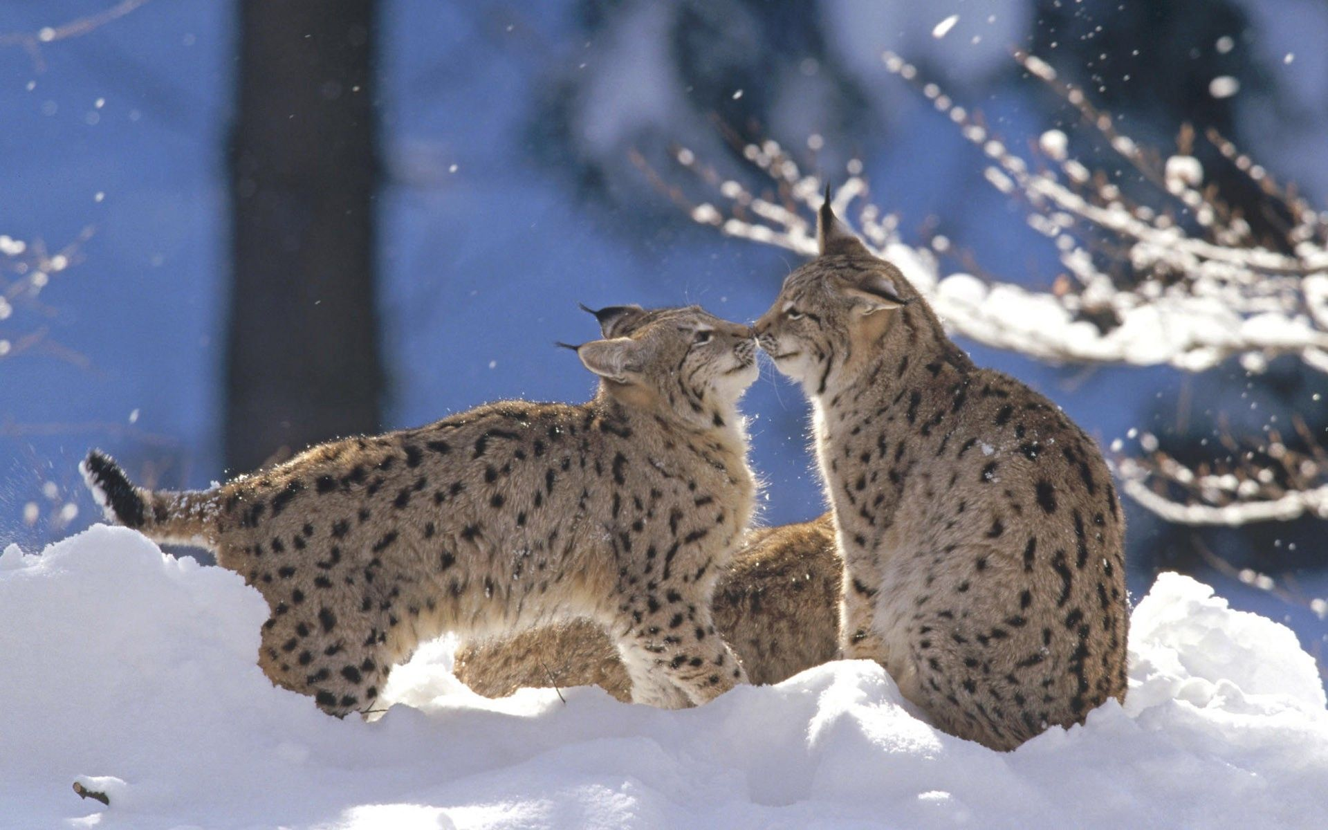 Winter Animal Pictures