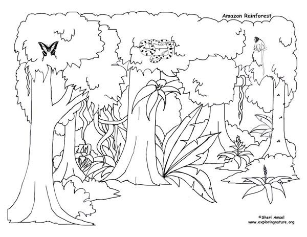 Rainforest Activities and Printables For Kids Rainforest
