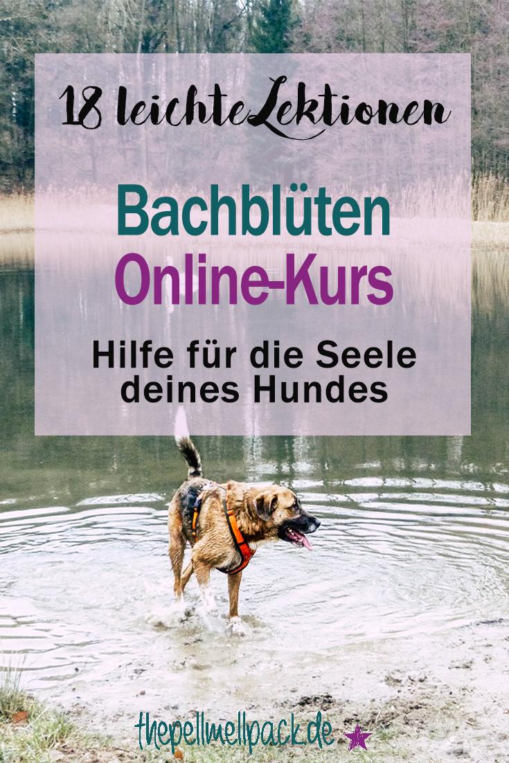 Bachblüten Online-Kurs -- So gewinnst du Sicherheit in der Anwendung | Bach Blüten | Angst | Aggression | Hund | thepellmellpack.de