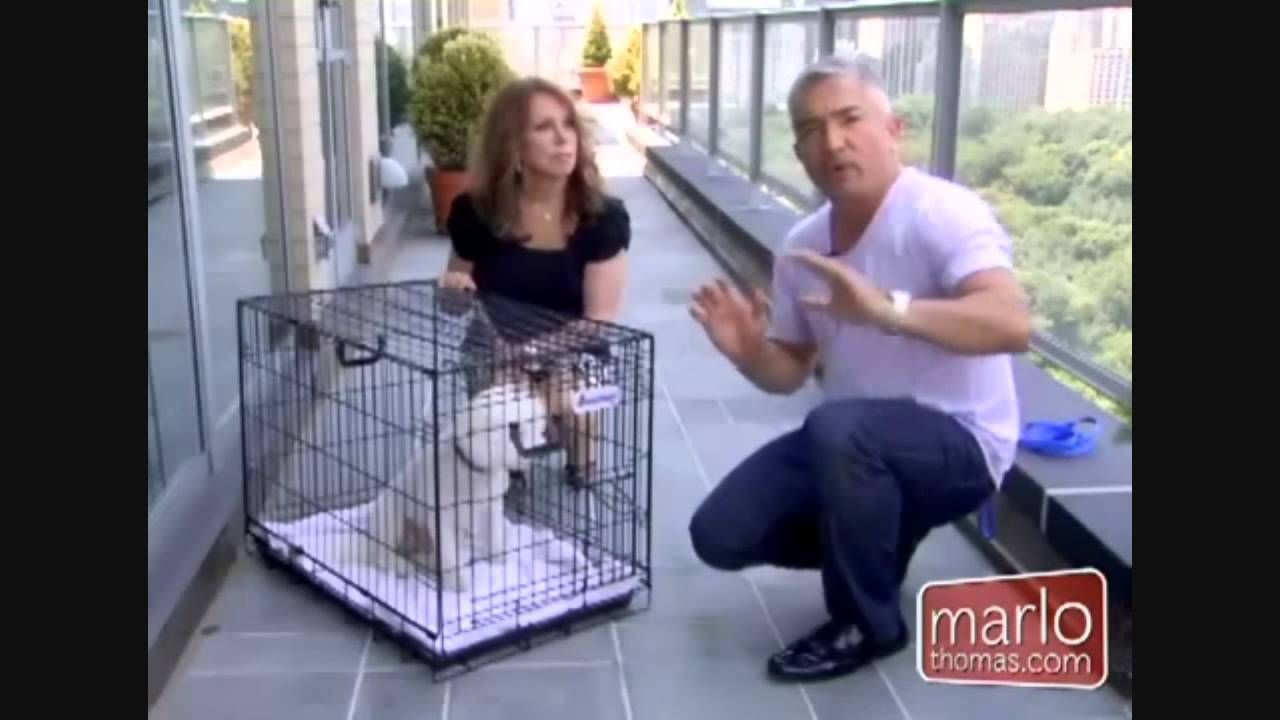 Professional Dog Trainer Cesar Milan S Tips On How To Crate Train