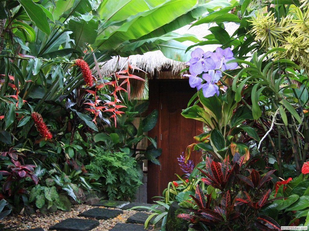 Heliconia La Planta Preferida En Jardines Tropicales Y: Jardines Tropicales