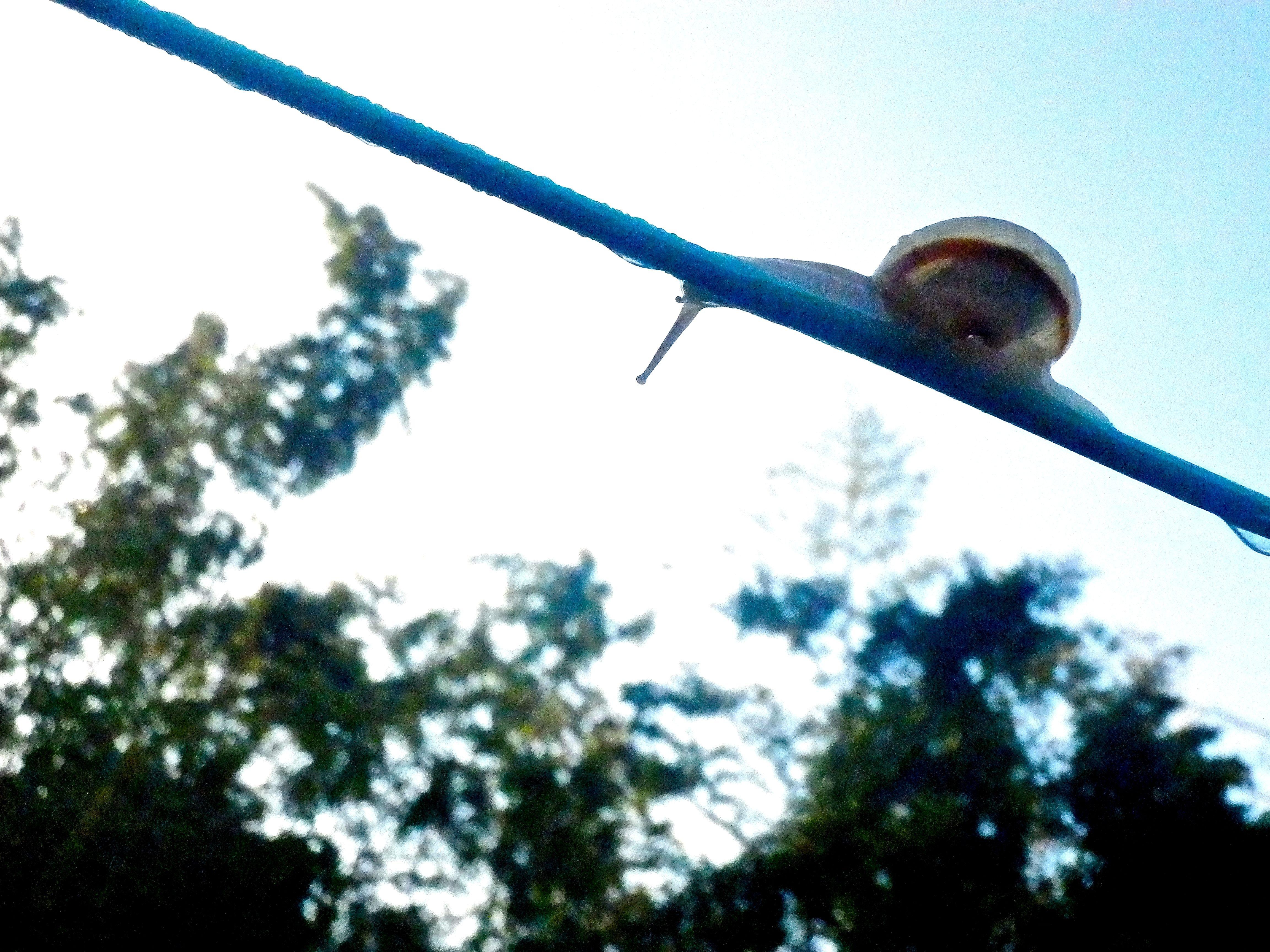 綱渡り(Tightrope walking)