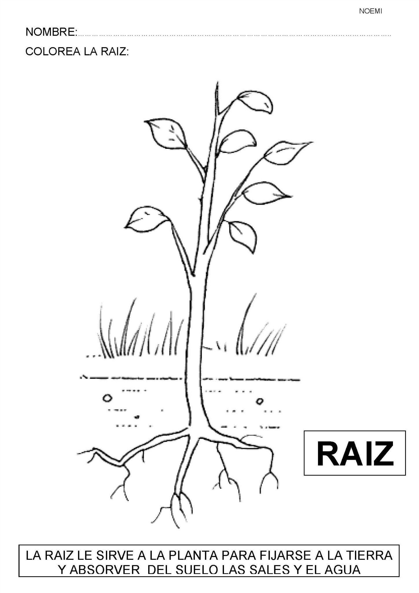 plantas, recursos educativos, flores, arboles, naturaleza | Proyecto ...