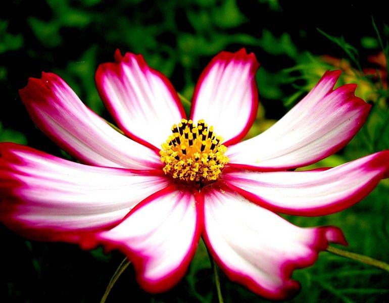 fotos de flores preciosas bonitas hermosas galeras de fotos - Fotos De Flores Preciosas