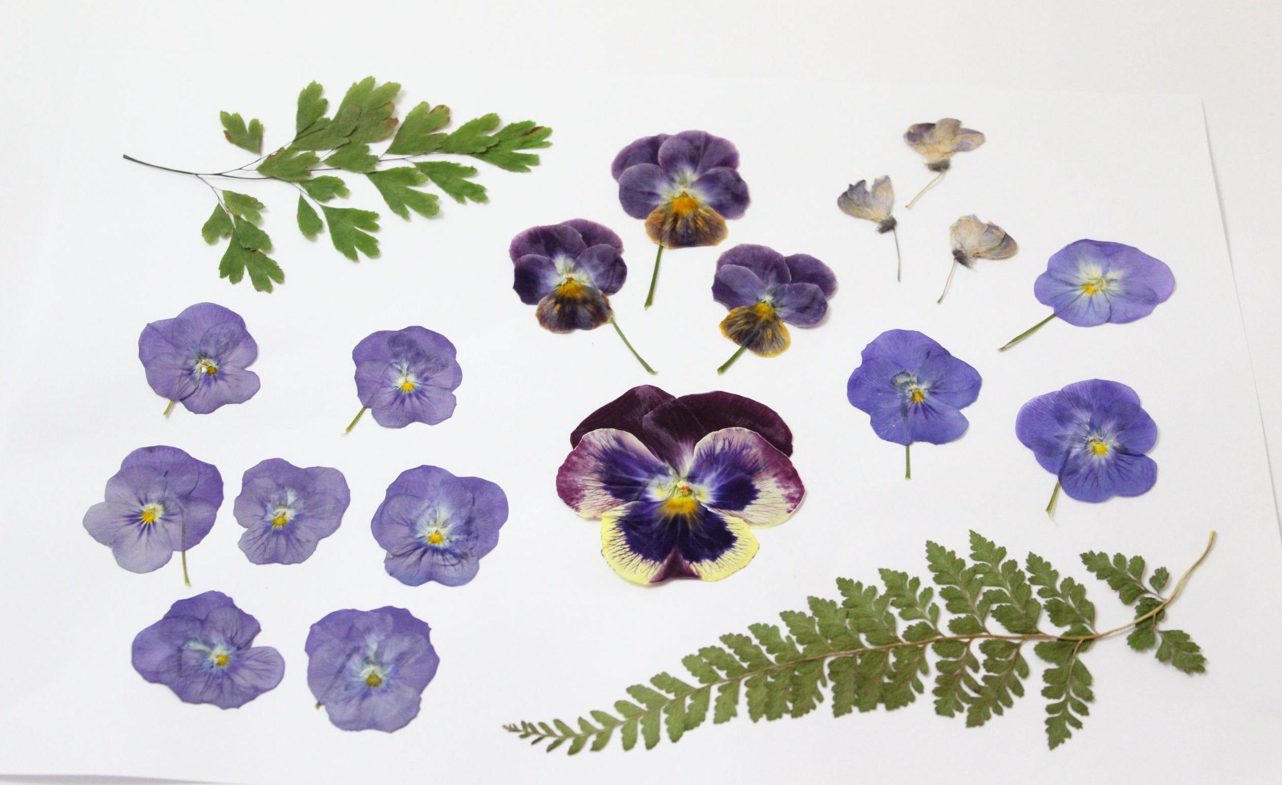 19pcs Mixed Dried Flowers And Pressed Leaves Maiden Hair Etsy In 2020 Flower Supplies Dried Flowers Pansies Flowers
