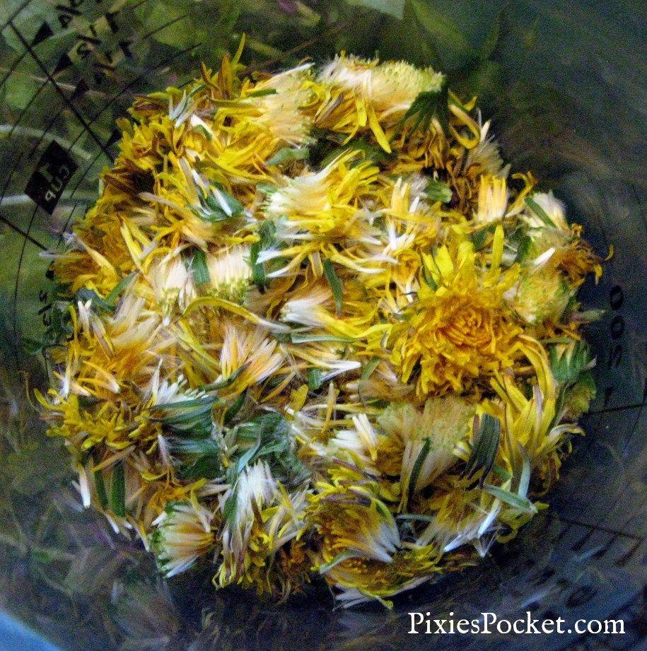 cup of dandelion flowers pixiespocket.com