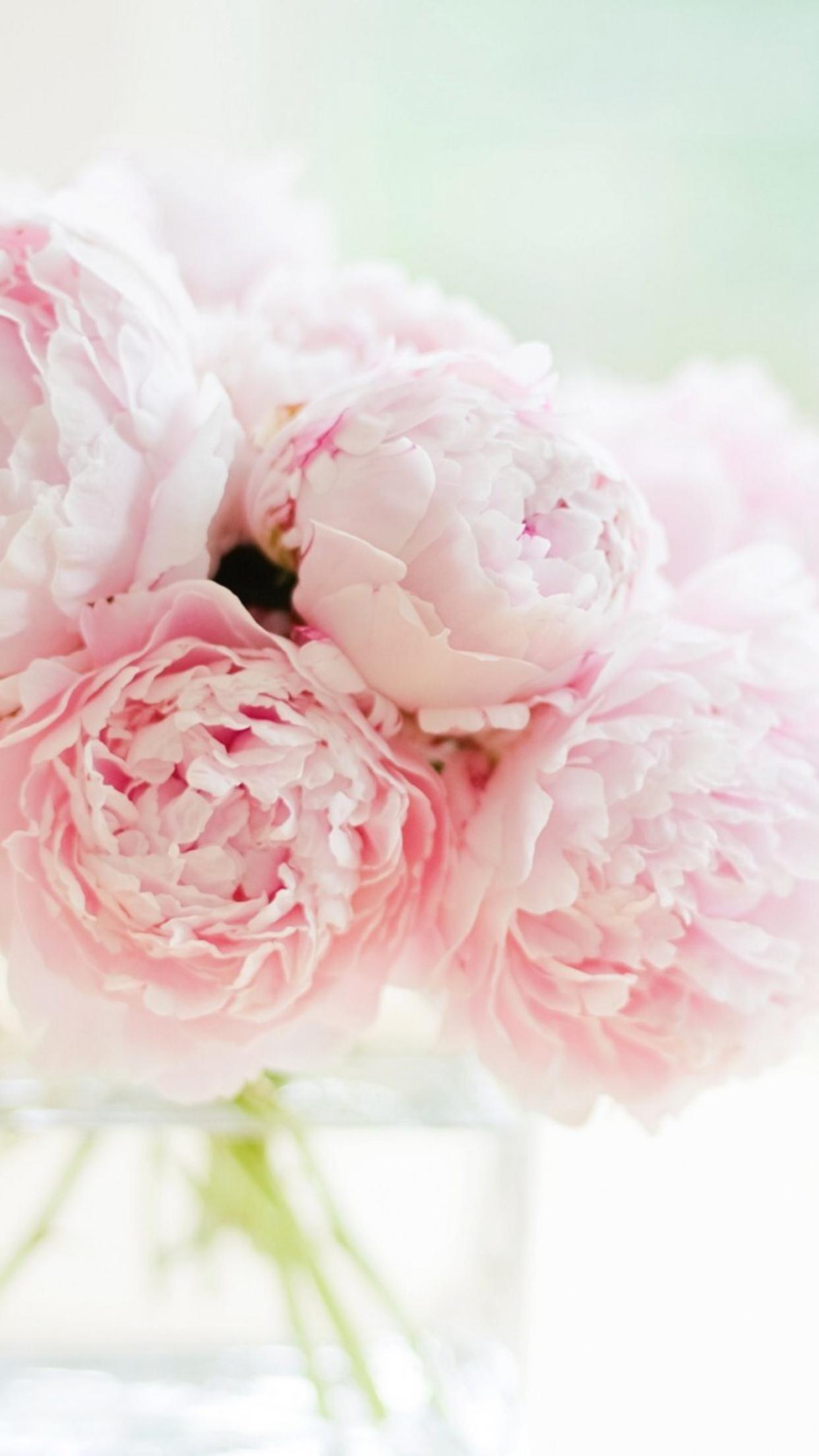 IMG_9210.png (1242×2208) Pink peonies wallpaper, Peonies