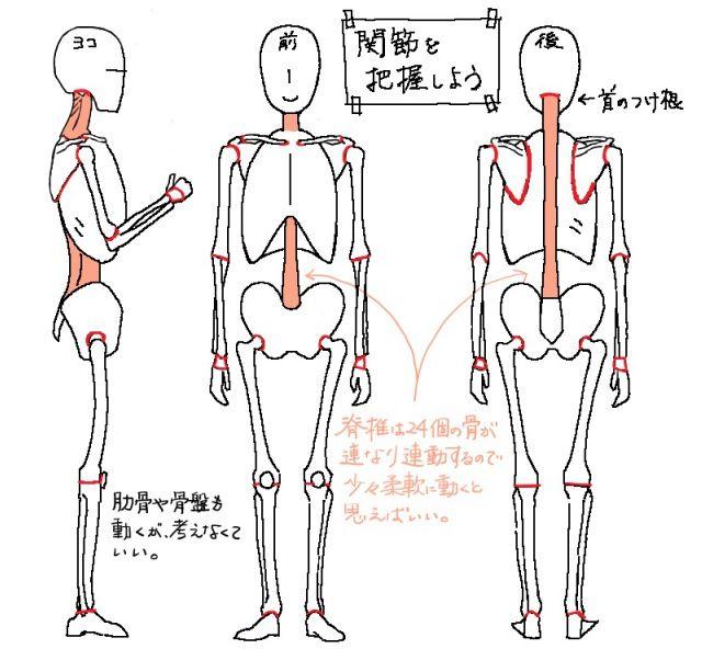 イラストで人を描くには人体構造を知ることが上達の近道!