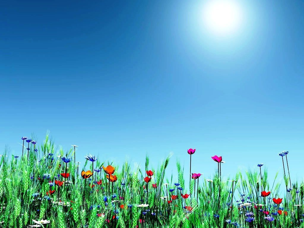 Lungs Nature Wallpaper Free Desktop Wallpaper Spring Flowers Cvetochnye Fony Vesennie Cvety Letnie Cvety
