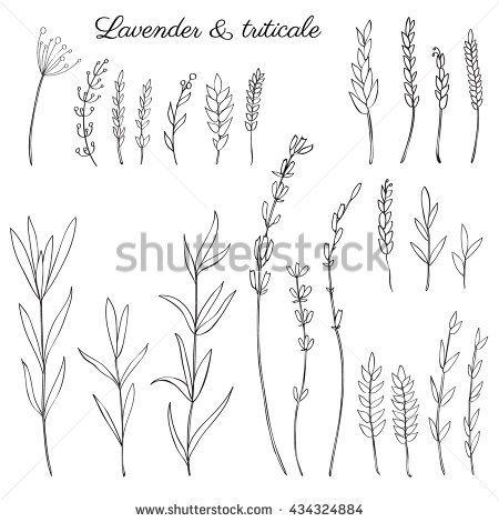 Lavender Flowers Triticale Herbs Hand Drawn Doodle Vector Sketch