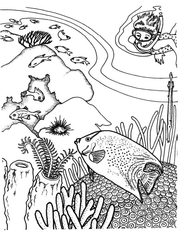 Coral Reef Fish Diving Enjoy Viewing Coloring Pages