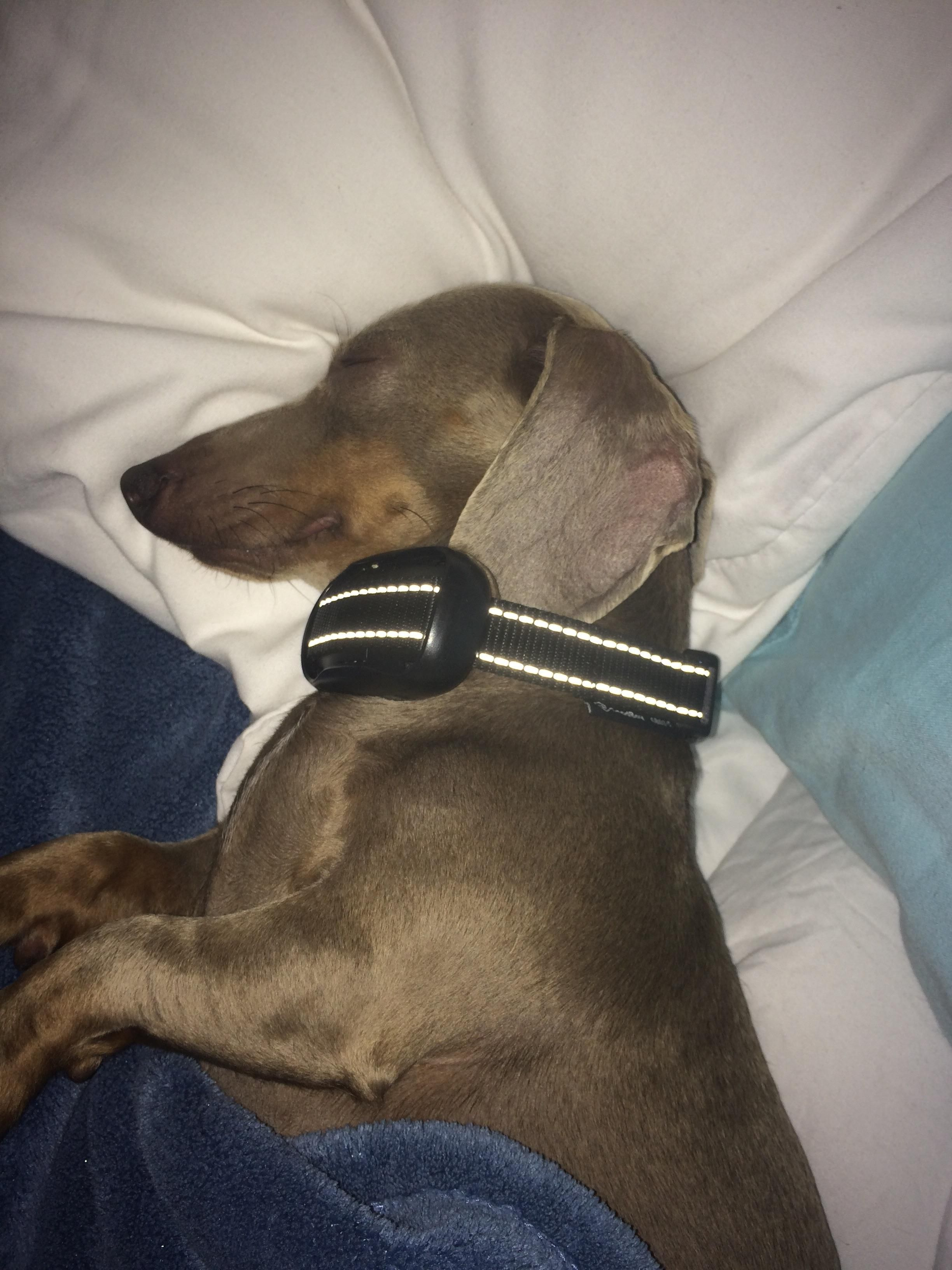 Puppy sleeping iftutlux whous cute pinterest