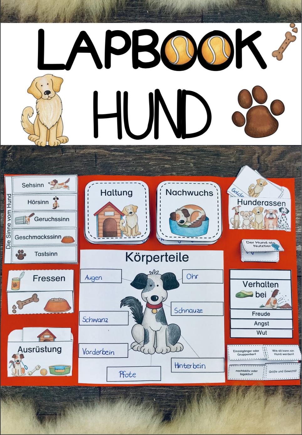 Lapbook Hund Hund Lapbook Lernheft Schulhund Haustier Projekt