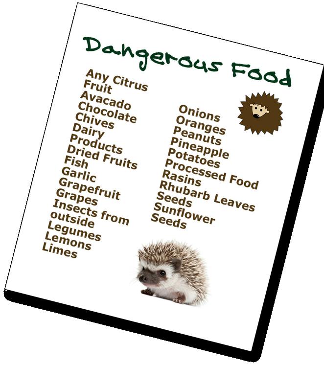 Do Hedgehogs Eat Cat Food