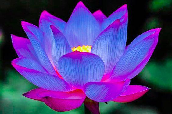 Httpdeviantartartlotus flower photo 369736154 httpdeviantartartlotus flower mightylinksfo