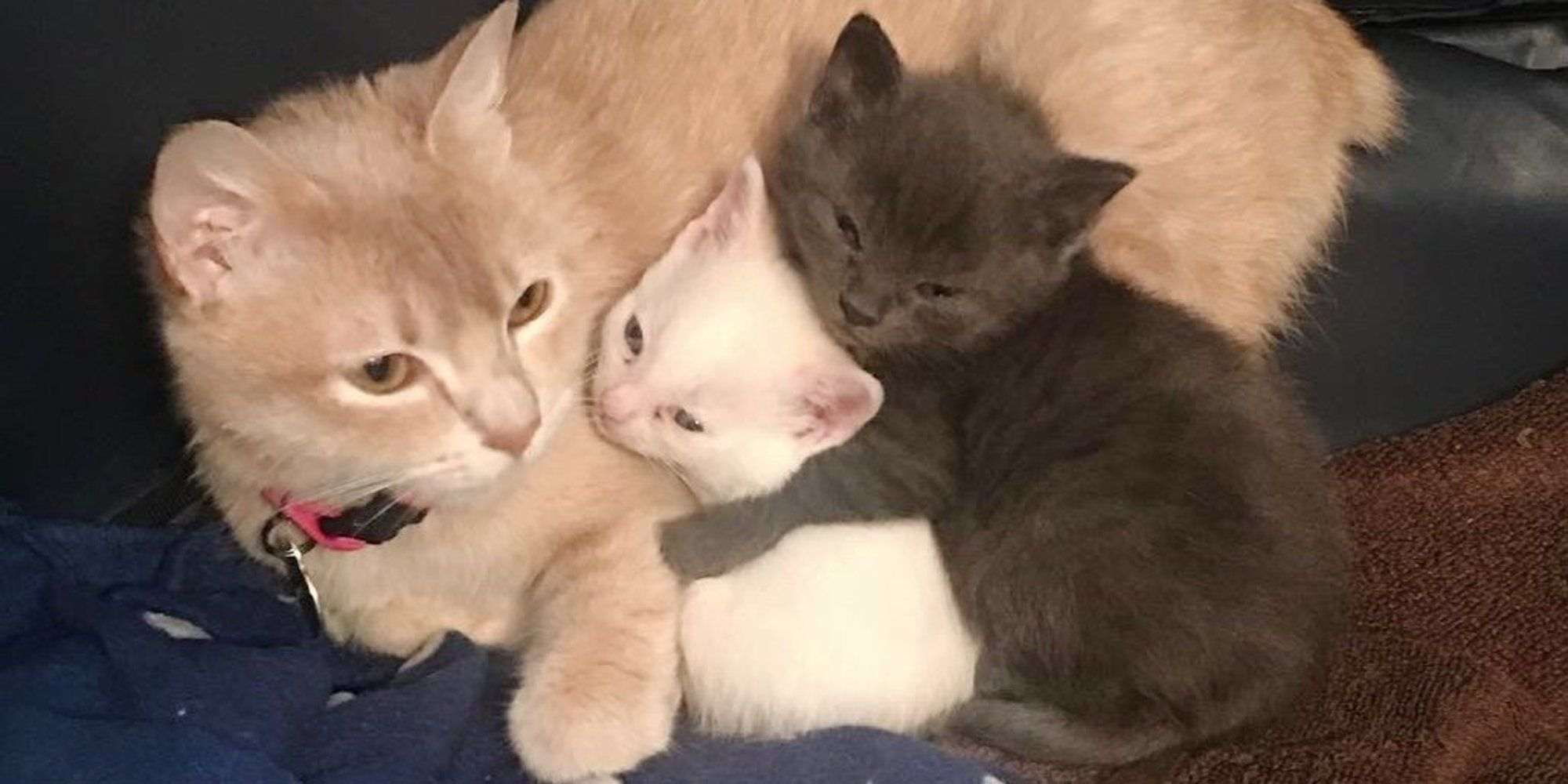 Two Abandoned Kittens Needed A Mom And A Grieving Mother Cat Needed Babies When They Found Each Other They Filled The Void Cat Rescue Cat Facts Cute Animals