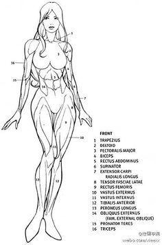 Anatomia Femenina Dibujo Buscar Con Google Disegno Di Anatomia Disegno Di Figura Come Disegnare Le Persone