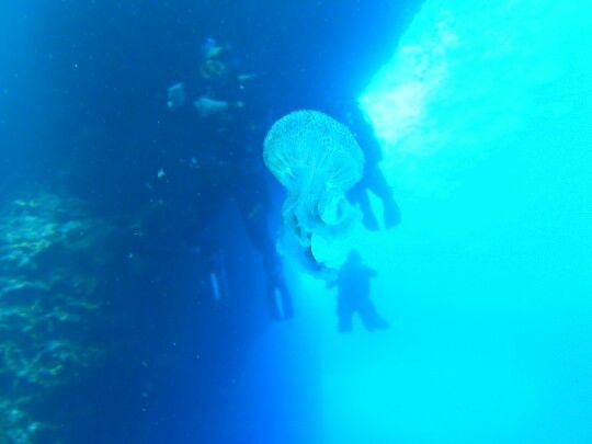Immersione presso l'isola di Gozzo Foto scattata da Jonathan Mantovani Gruppo subacqueo Montagnana viale spalato 35044 Montagnana ( PD ) 0442981200 LUNEDÌ E GIOVEDÌ DALLE 21.00 ALLE 23.00