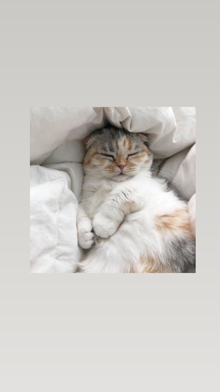 Обои на телефон/Эстетика☁️ | Очаровательные котята, Милые котики, Кошачьи обои