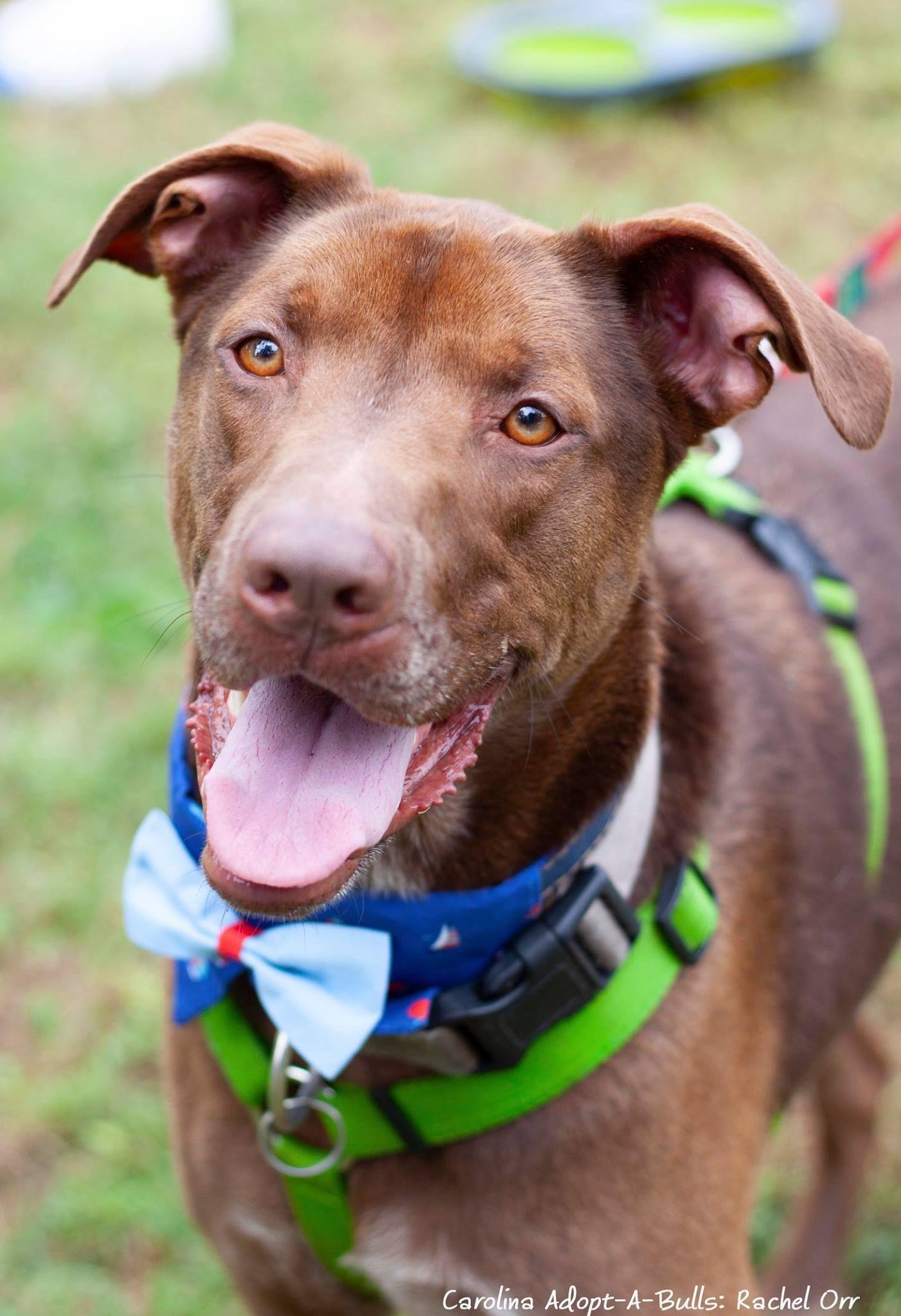 Adopt Blaze on Petfinder Dog adoption, Adoption, Dogs